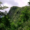 Rainforest - El Yunque, Puerto Rico