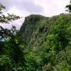 Rainforest – El Yunque, Puerto Rico