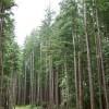 Temperate Rainforest - Vancouver, Canada