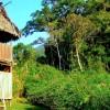 Manu Cloud Forest – Amazon Basin, Peru
