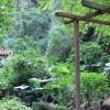 Antigua Garden - Guatemala