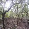 Murky Swamp – Queensland, Australia