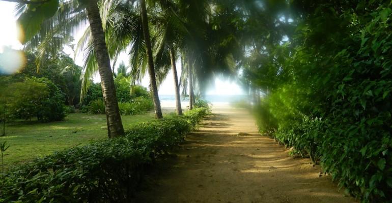 Falling Rain – La Loma Lodge, Panama