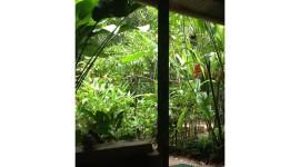 Rainforest – Isla Bastimentos, Panama