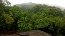 Rainforest – Ilha Grande, Brazil