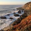 Bodega Head – California, USA