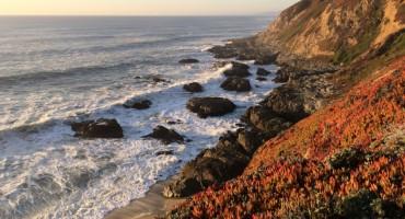 Bodega Head - California, USA