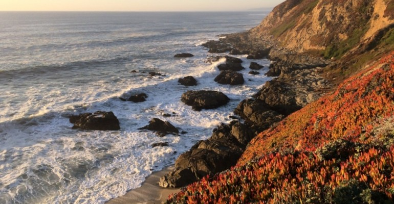 Bodega Head – California, USA