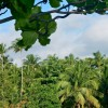 Birdsong – Puerto Rico