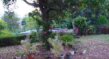 Grandma's Garden - Chiriqui, Panama