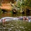 Lake Mburo National Park - Uganda