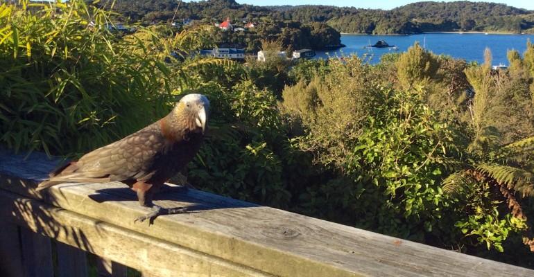 Waiheke Island - Auckland, New Zealand