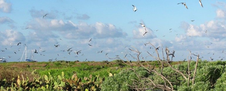 Tern Rookery – Dry Tortugas National Park, USA