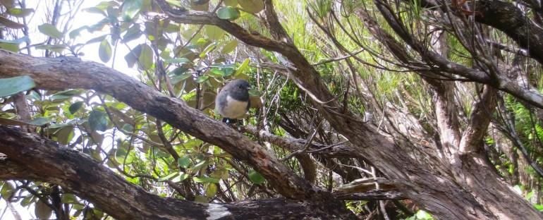 Ulva Island – New Zealand