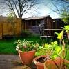 Backyard Birds – Banbury, England