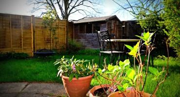 Backyard Birds - Banbury, England