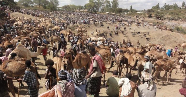 Cattle Market – Bati, Ethiopia