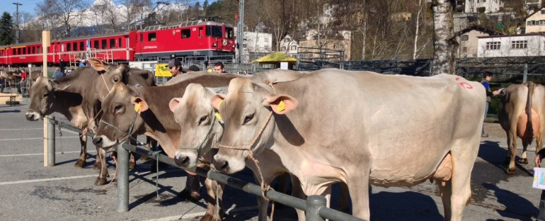 Cattle Market – Llanz, Switzerland