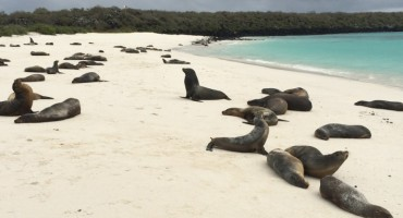 Sea Lions at Gardner Bay - Galápagos Islands, Ecuador