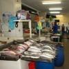 Local Fish Market – Panama City, Panama
