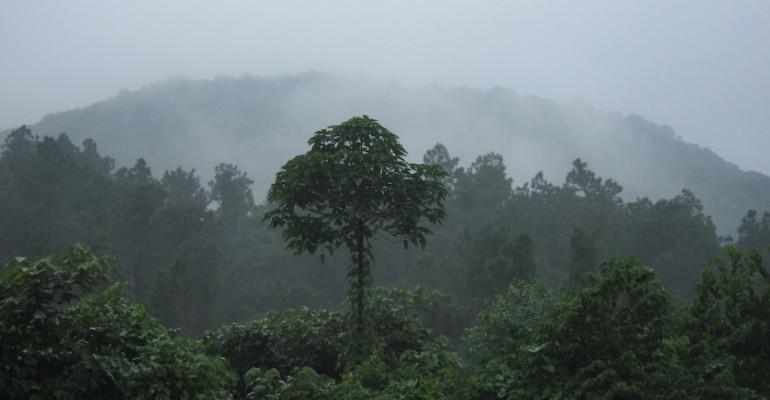 Morning Birds – Bach Ma National Park, Vietnam