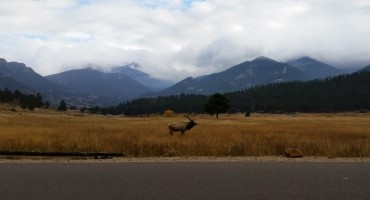 Elk Calls – Rocky Mountain National Park, USA