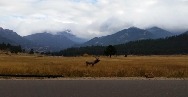 Elk Calls – Rocky Mountain National Park, USA