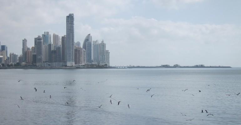 Seagulls – Panama City, Panama
