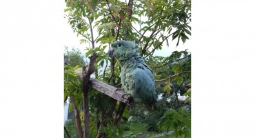 Paquita the Talking Parrot - Biblian, Ecuador