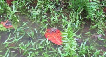 Frogs – Bako National Park, Malaysia