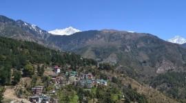 Morning Bird – Dharamsala, India