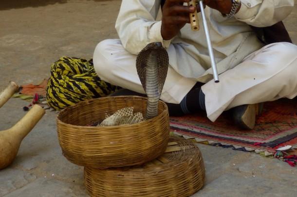 Snake Charmer – Jaipur, India2
