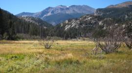 Grasshoppers – Rocky Mountain National Park, USA