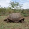 Tortoise Reserve – Galápagos Islands, Ecuador