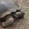 Tortoise Reserve - Galápagos Islands, Ecuador2