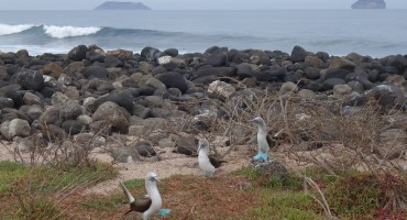 Ocean and Blue-Footed Boobies - Galápagos Islands, Ecuador