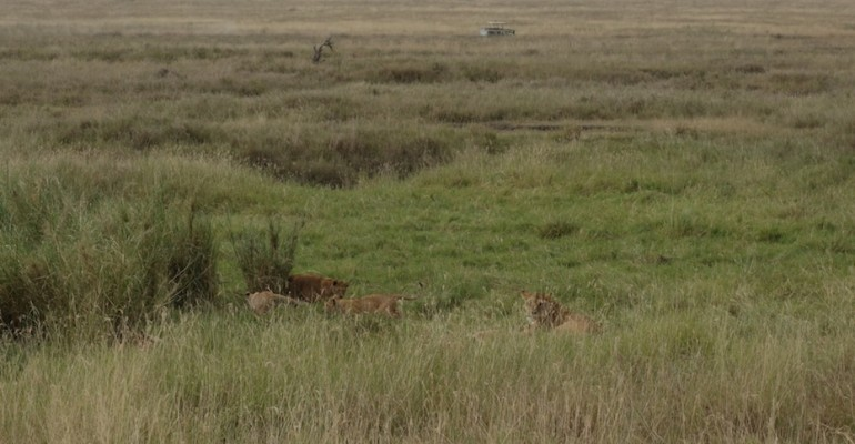 Lion Cubs – Serengeti National Park, Tanzania
