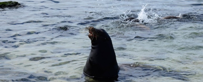 La Lobería Ocean and Sea Lion – Galápagos Islands, Ecuador