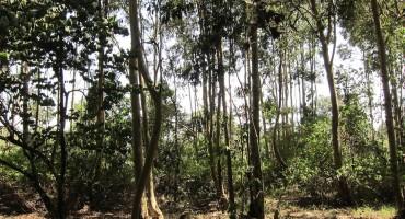 Karura Forest – Nairobi, Kenya