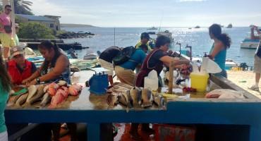 Puerto Ayora Fish Market - Galápagos Islands, Ecuador