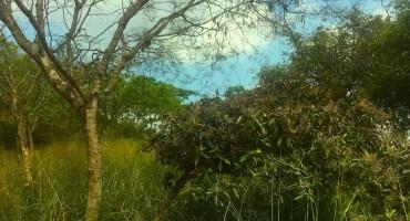 Parque Nacional Bataclán - Cali, Colombia