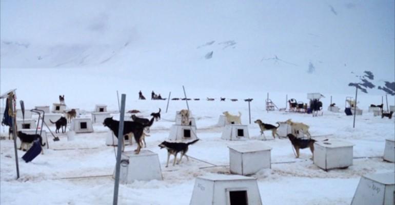 Dogsledding – Mendenhall Glacier, Alaska