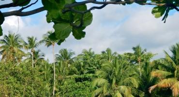 Birdsong - Puerto Rico