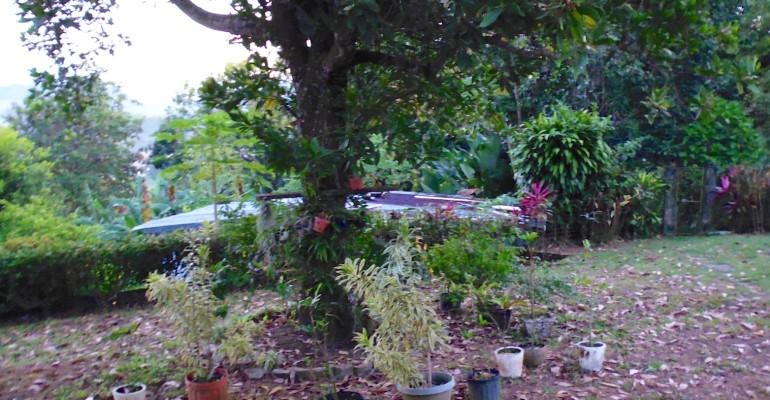 Grandma's Garden – Chiriqui, Panama