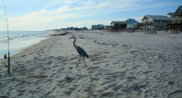 Gulf Shores - Alabama, USA