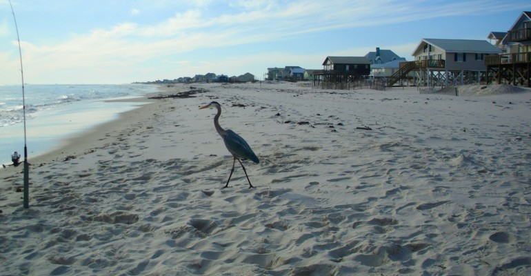 Gulf Shores – Alabama, USA