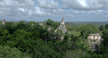 Howler Monkeys - Tikal, Guatemala