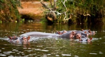 Lake Mburo National Park – Uganda