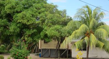 Morning Birds - Hopkins, Belize