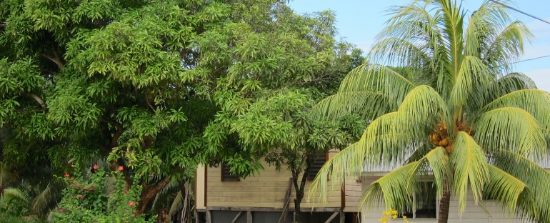 Morning Birds – Hopkins, Belize
